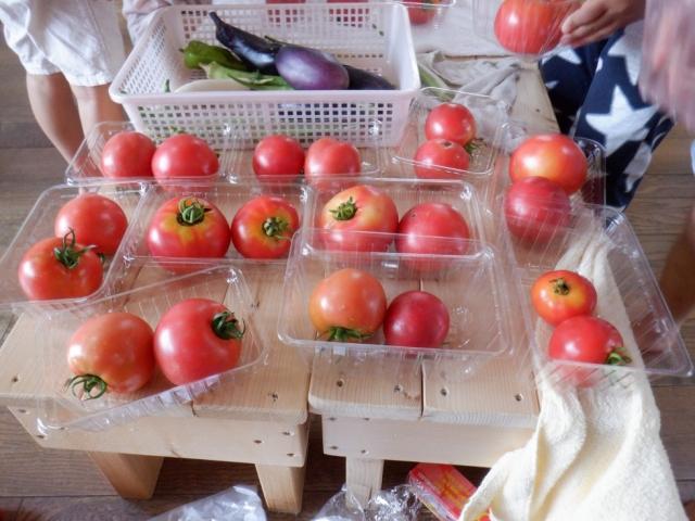 保護中: トマト大豊作!